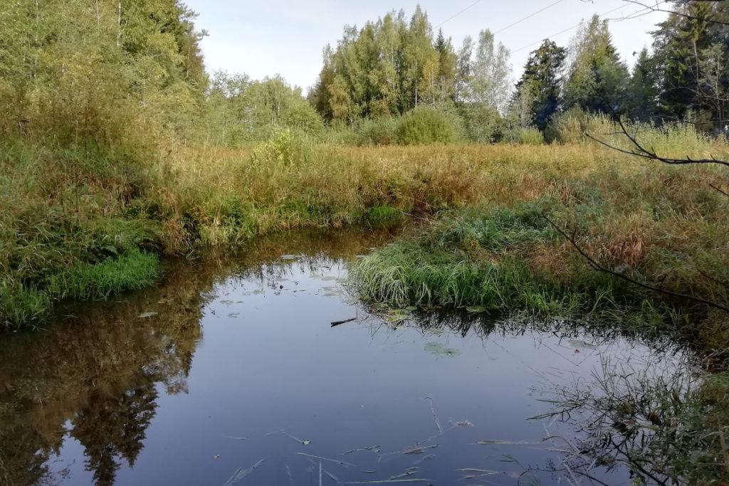 речка Ракитинка в Ленобласти