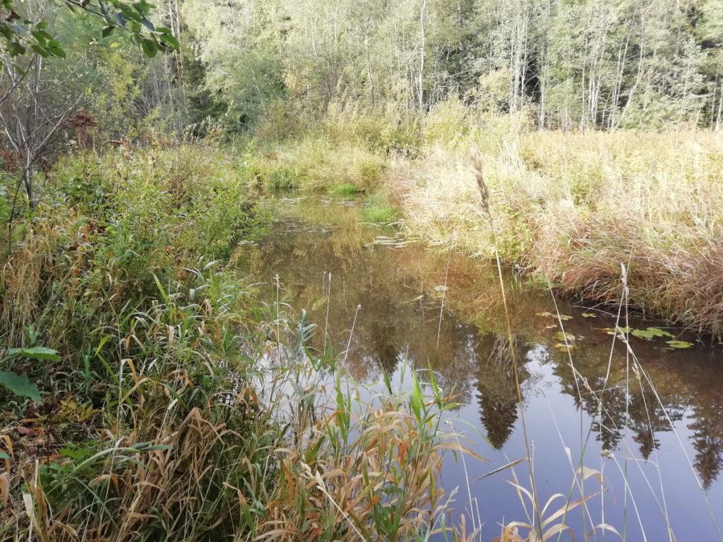 река Ракитинка в Гатчинском районе Лен области